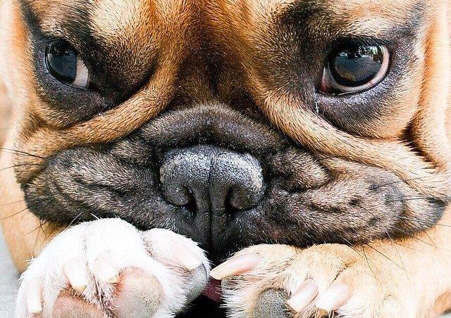 Cuántas Razas De Perros Hay En El Mundo