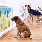 arte para perros