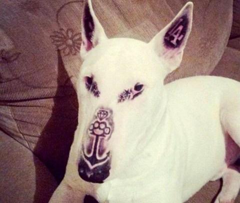 tatúa a su perro