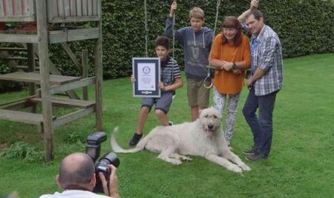 perro con cola más larga del mundo