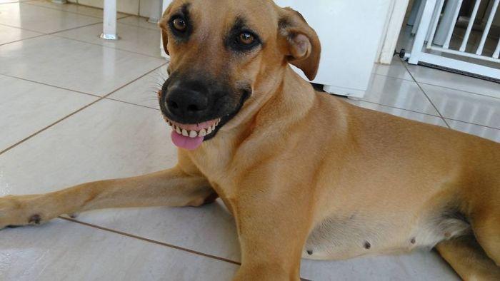 perro con dentadura postiza