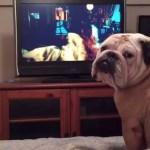 perro viendo película de terror
