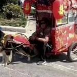 perros taxi