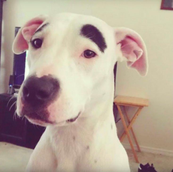 perros únicos
