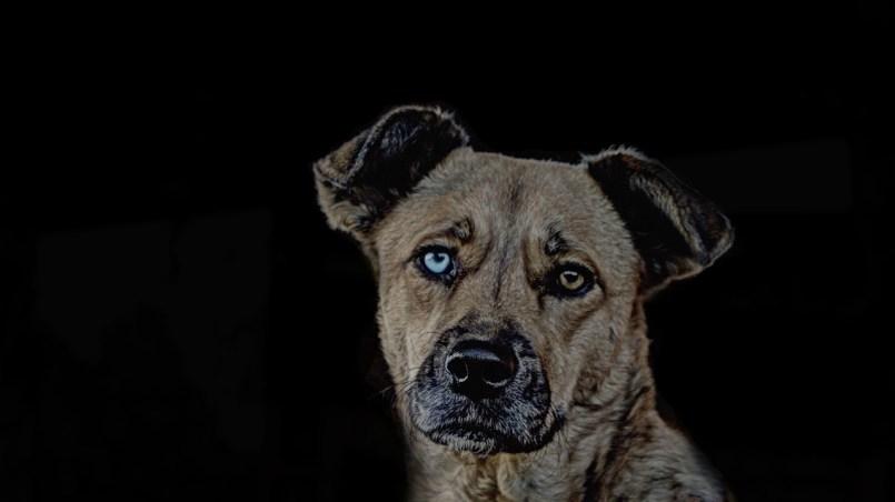 perros no ven el color rojo