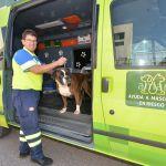 servicio de recogida de mascotas