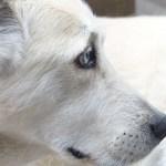 Cómo ayudar a un perro a superar la muerte de su propietario