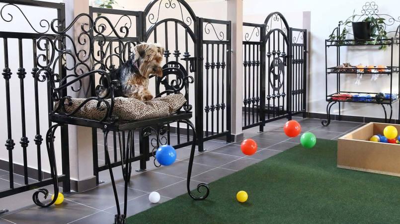 guardería para perros