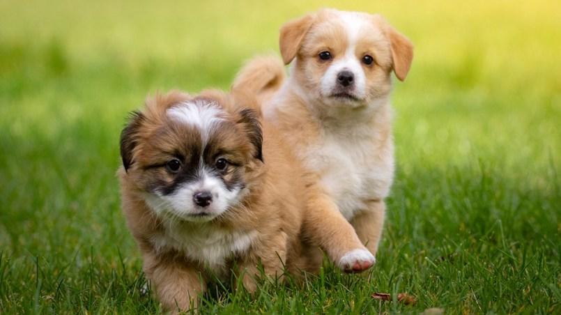 nombres de perros hembras