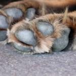 perro muerde las patas