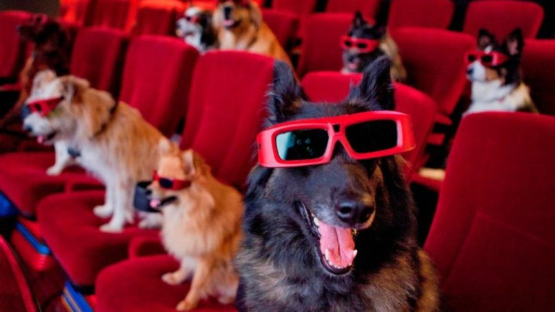 primer cine dog friendly