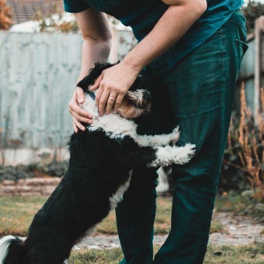 reforzar vínculo con perro