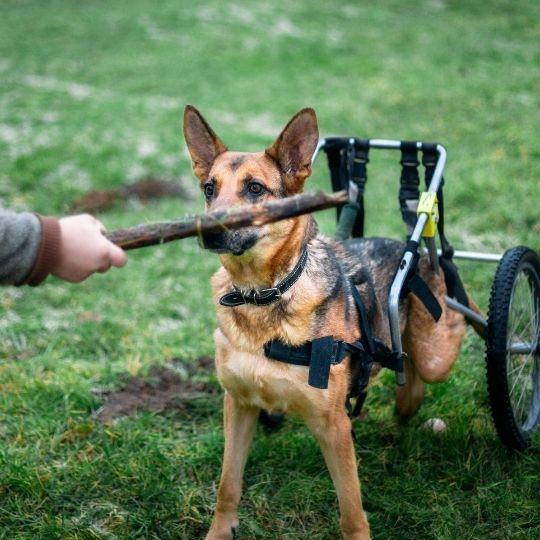 perros con discapacidad