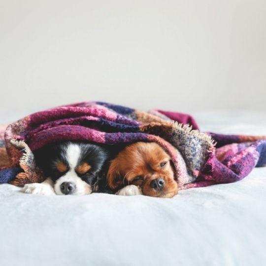 climatización del hogar con perro