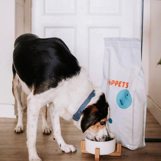 analizar heces de perro