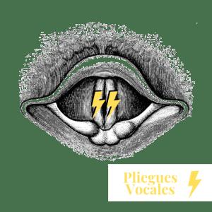 encantar con tu voz cursos online de canto pliegues vocales