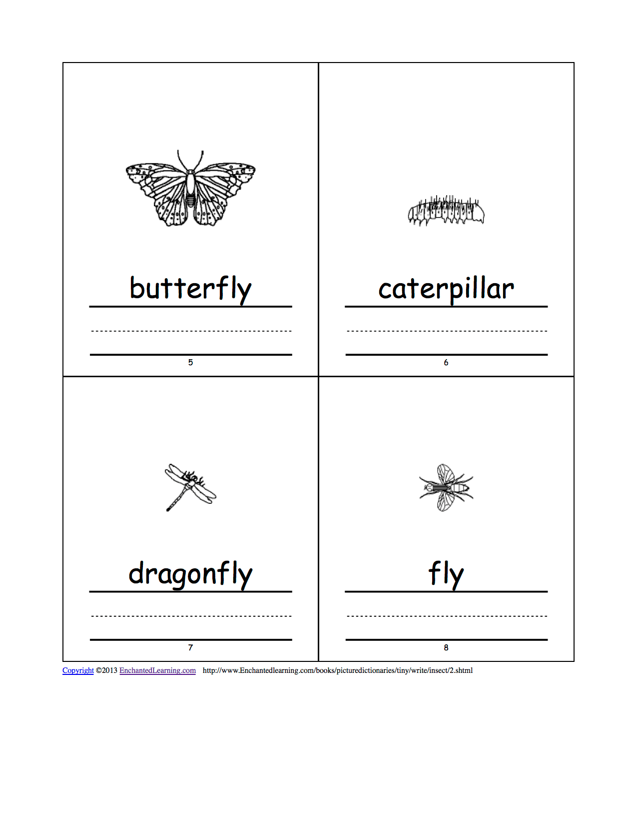 Insect Picture Dictionary