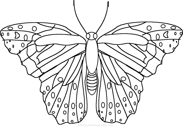 Butterfly: Fact or Opinion?, A Worksheet