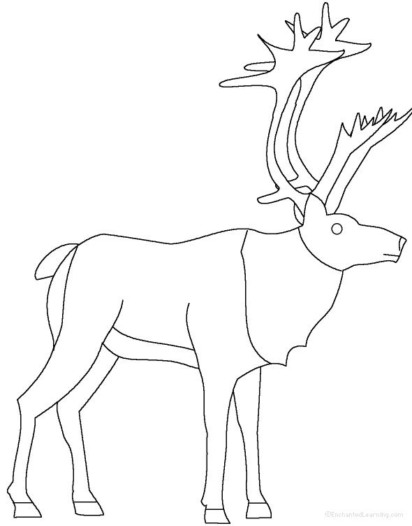 Reindeer at EnchantedLearning.com