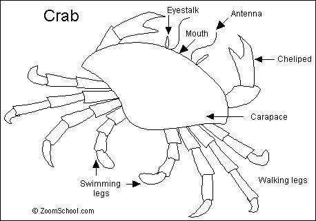Crab- Enchanted Learning Software