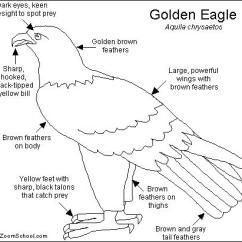 Golden Eagle Skeleton Diagram 1996 Ford Bronco Rear Window Wiring Click On A Region In The Picture To Color It With Selected Color.