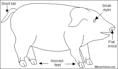 Diagram Pig Digestive File Je89082
