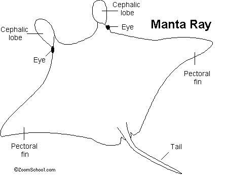 Manta Ray- Enchanted Learning Software
