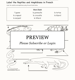 Reptiles And Amphibians Worksheet For Kids   Printable Worksheets and  Activities for Teachers [ 2112 x 1632 Pixel ]