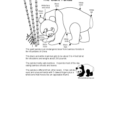 panda body diagram schematic wiring diagrams rh 28 koch foerderbandtrommeln de body diagram parts body diagram parts [ 1275 x 1649 Pixel ]