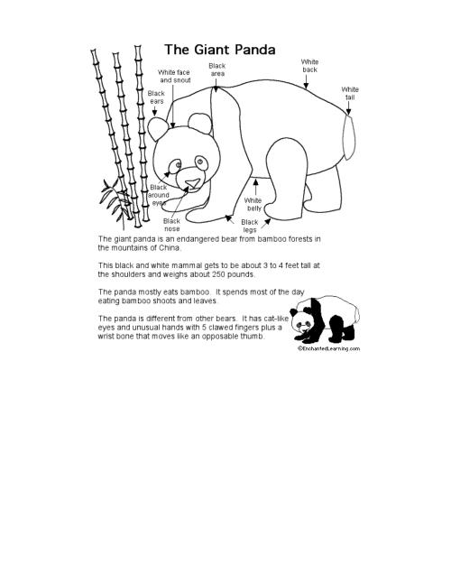 small resolution of panda body diagram schematic wiring diagrams rh 28 koch foerderbandtrommeln de body diagram parts body diagram parts
