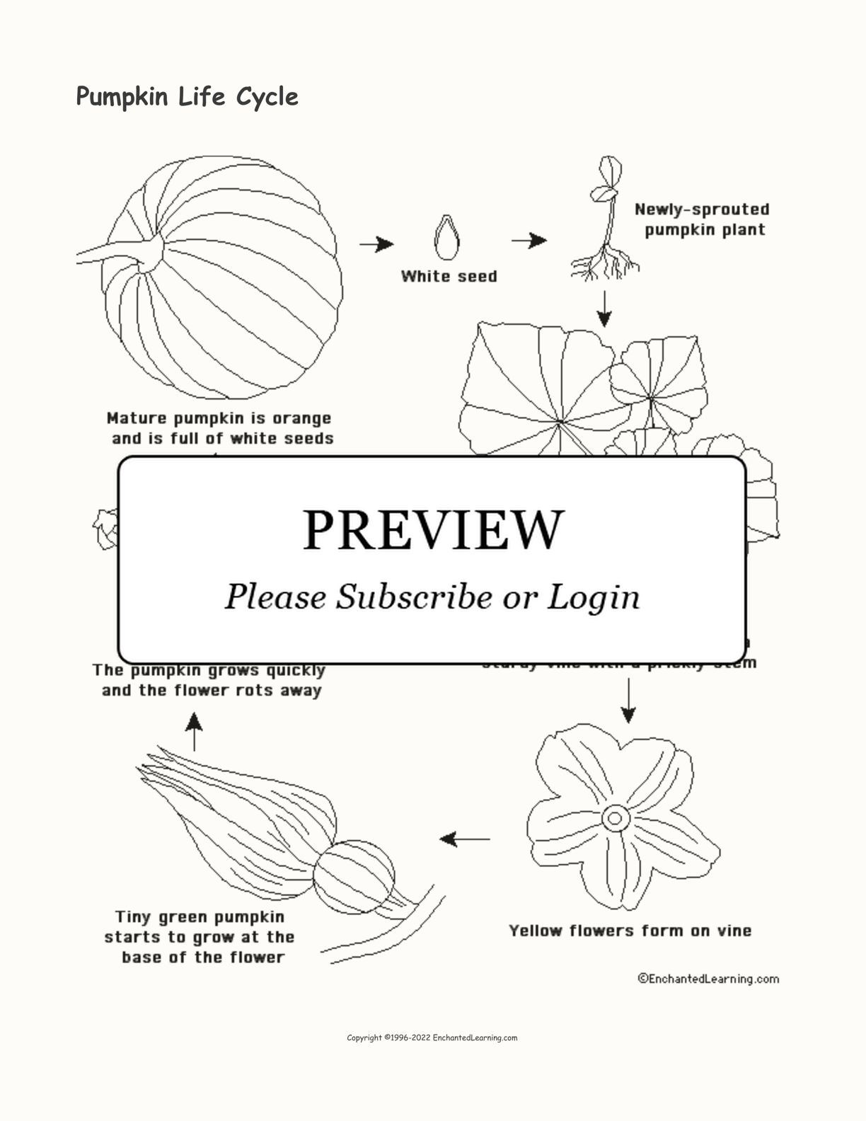 Pumpkin Life Cycle Printout