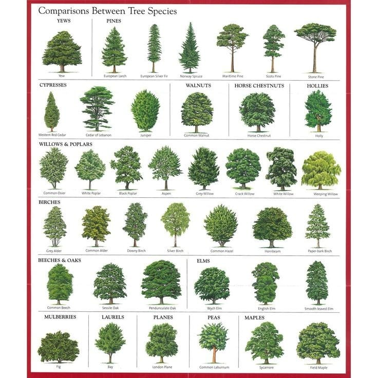 Learn How To Identify Trees And Leaves Enchanted Little World