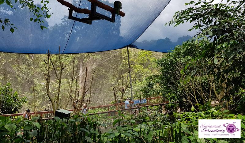 Cairns Skyrail Cablecar Australian Bird Sanctuary