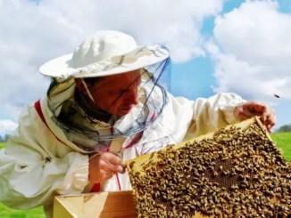 el apicultor