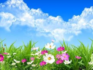 campo florido