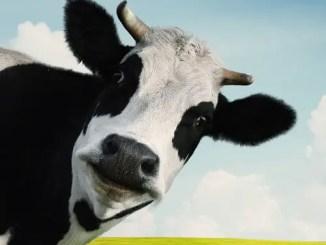 La vaca lechera - Canción infantil