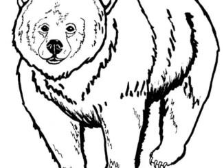 Los amigos y el oso