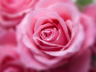 Poesías de amor cortas y bonitas