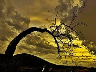 Poesía sobre la ecología