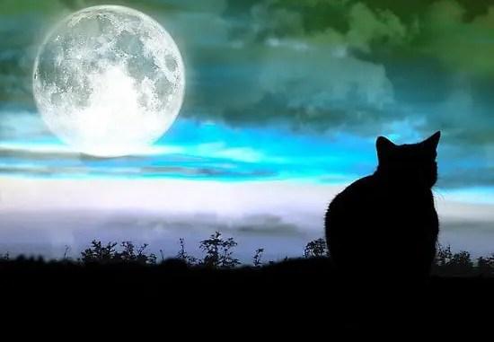 Poema del gato y la luna