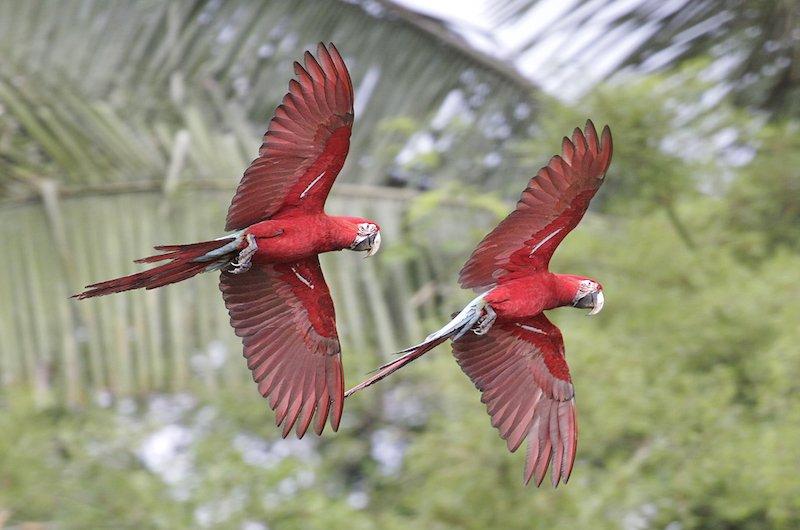 Manu National Park Tour