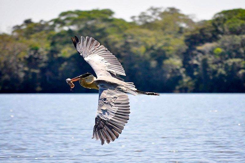 Lake Sandoval Peru, Tambopata Clay Lick, Tambopata Eco Tours