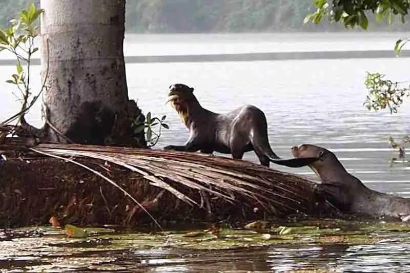Lake Sandoval Peru, Tambopata Clay Lick