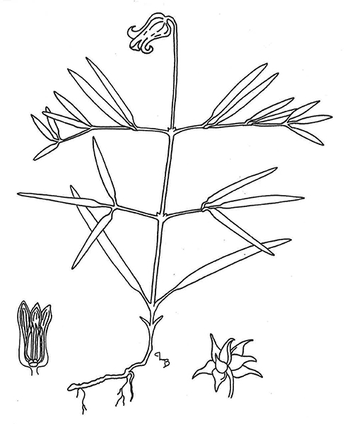 small resolution of alabama leather flower diagram