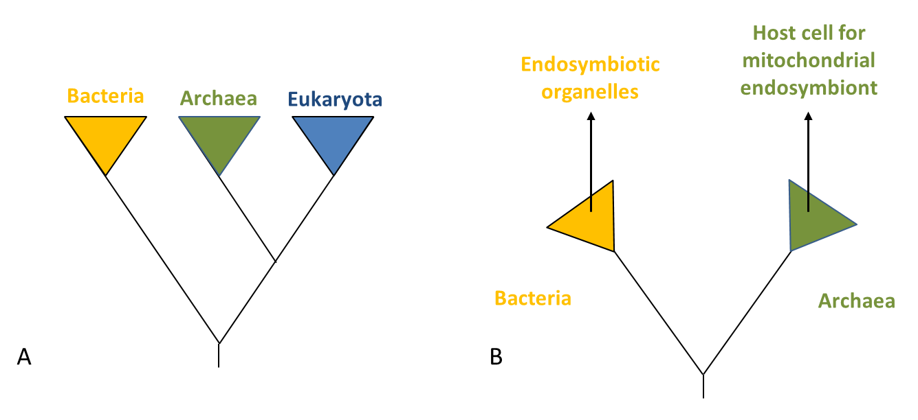 hight resolution of how did the eukaryotic cell evolved