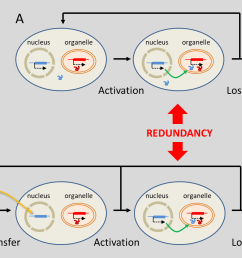 figure 7 evolutionary mechanisms leading to the replacement of organelle genes by genes located in the nucleus substitution a involves genes of true  [ 1570 x 874 Pixel ]