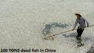 Fish die off in Wuhan