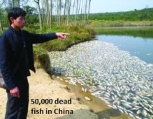 50,000 Dead Fish in China