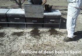 Dead Bees in Spain