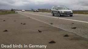Dead Birds in Germany